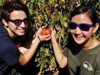 Alternative Breaks: Food Justice fundraiser