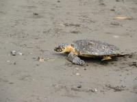 Help the Sea Turtles fundraiser