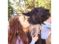 Alternative Breaks: Animal Welfare fundraiser
