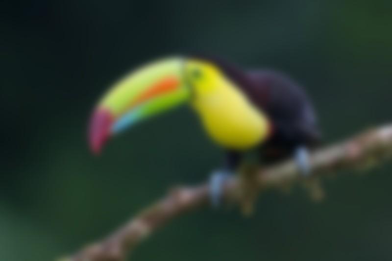 Online Fundraiser for Trip to Costa Rica by Emmanuelle Brown-Cashdollar | Piggybackr