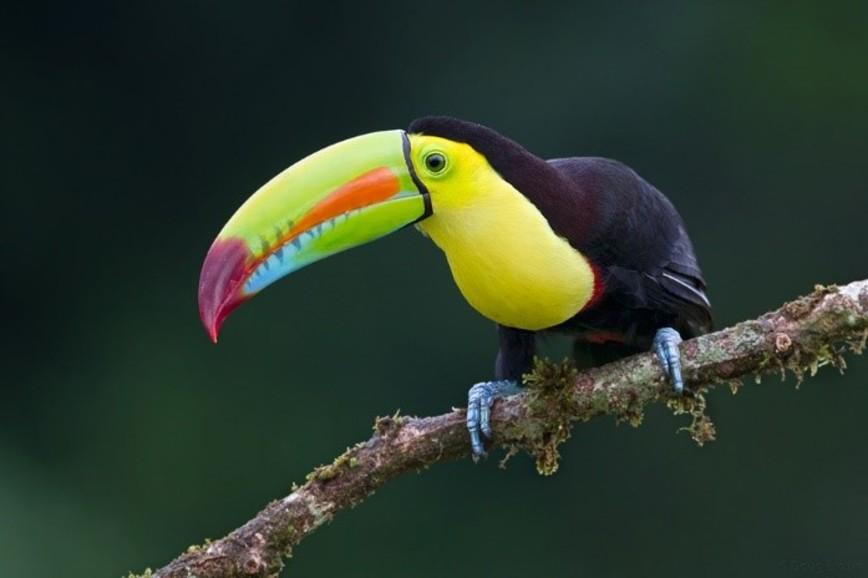 Trip to Costa Rica fundraiser